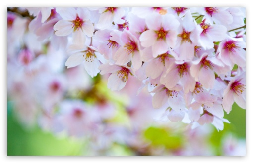 Download Colours of Spring UltraHD Wallpaper
