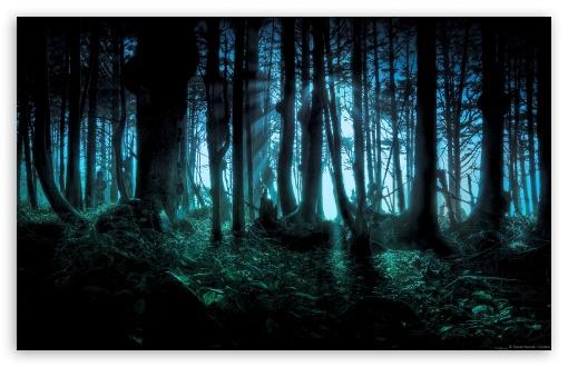 Download Mysterious Forest UltraHD Wallpaper