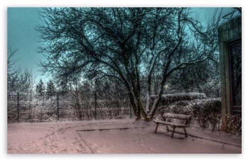 Download Snowy Tree UltraHD Wallpaper