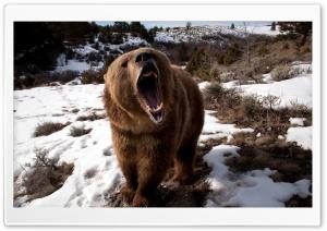 Brown Bear Roaring