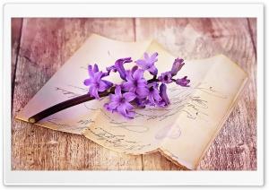 Fresh Hyacinth On Table