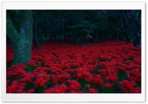 Red Flowers, Forest