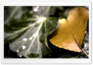 Golden Leaf (Precious But...