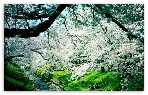 Download Wonderful Spring Day UltraHD Wallpaper
