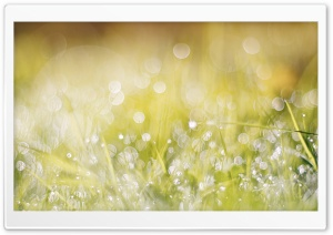 Wet Grass, Bokeh