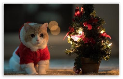 Download Little Santa Claus UltraHD Wallpaper