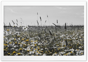 Black And Yellow Field