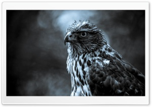 Eagle Perched