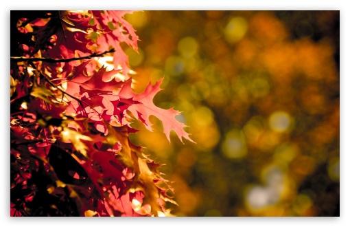 Download Autumn Bokeh UltraHD Wallpaper