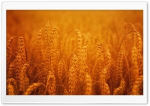 Golden Harvest Crops