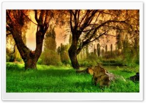 Paliano Landscape HDR