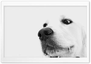 White Dog, Winter
