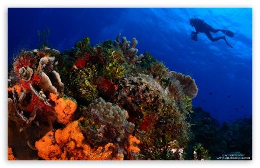 Download Scuba Diving UltraHD Wallpaper