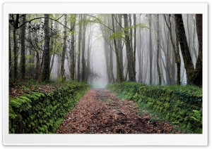 Path, Trees, Forest, Fog, Spring