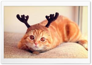 Reindeer Cat