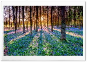 Spring, Forest, Flowers