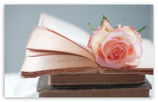Download Rose Book UltraHD Wallpaper