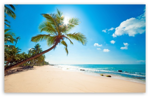 Download Tropical Sunshine UltraHD Wallpaper