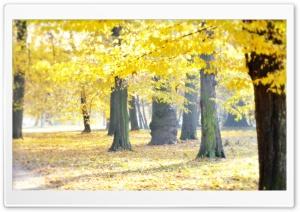 Airy Autumn