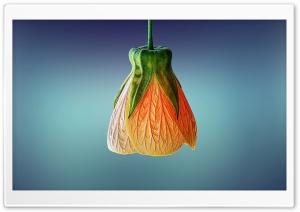 Orange Bell Flower