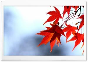 Red Leaves, Bokeh