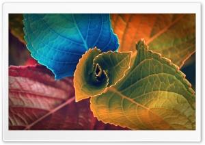 Colorful Plant
