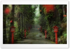 Alley In The Forest