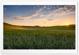 Sun, Wheat Fields near...