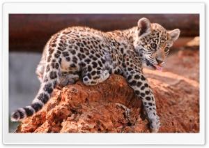 Jaguar Cubs, Bratislava Zoo