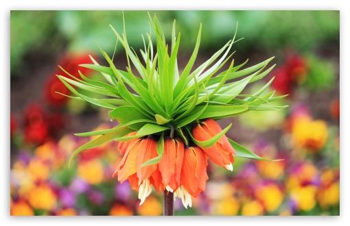 Download Amazing Flower Bokeh UltraHD Wallpaper