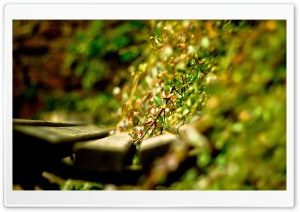 Bench   Green Plants