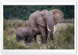 Baby and Mother Elephant, Africa