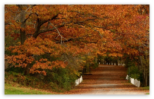 Download Autumn Scenes 19 UltraHD Wallpaper
