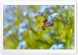 Amazing Bee