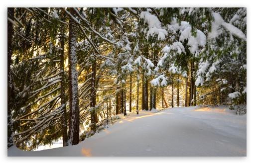 Download Forest, Winter UltraHD Wallpaper