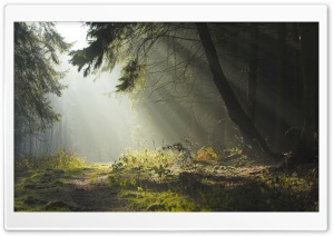 Forest 32