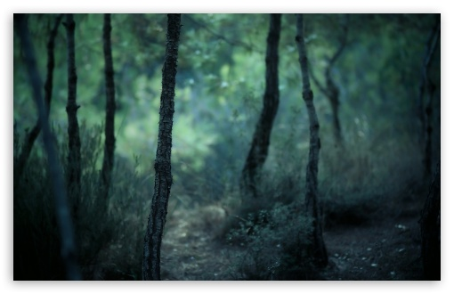 Download Young Forest UltraHD Wallpaper