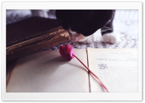 Cat Smelling Flower
