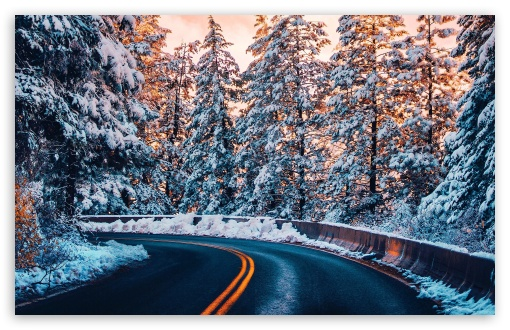Download Winter Forest Road UltraHD Wallpaper
