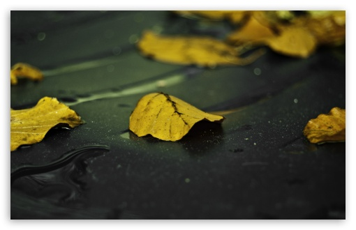 Download Yellow Leaves On Wet Asphalt UltraHD Wallpaper