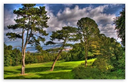 Download Trees At Summer, HDR UltraHD Wallpaper