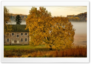 Yellow Tree, House, Mist, Autumn