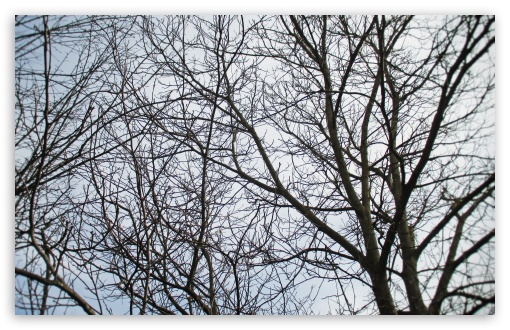 Download Branches UltraHD Wallpaper