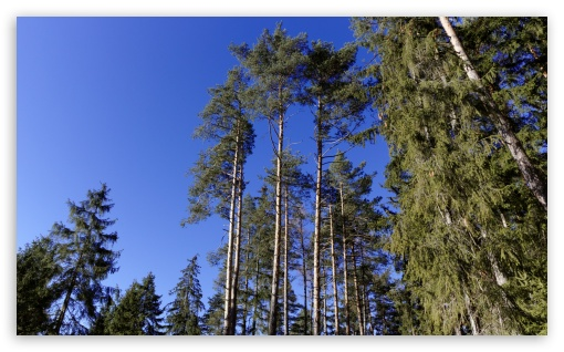Download Trees and Blue Sky UltraHD Wallpaper