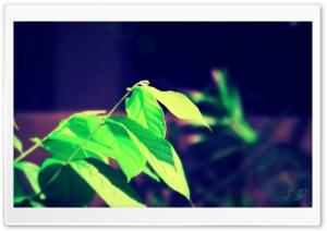 Nature, JD