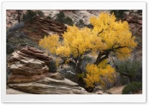 Yellow Tree, Rocks, Zion, Fall