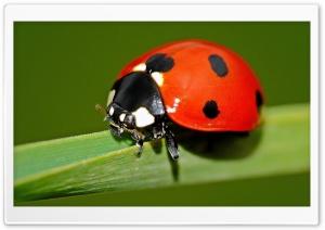 Ladybird Explore