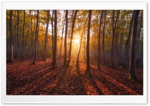 Warm Sunrise. Forest