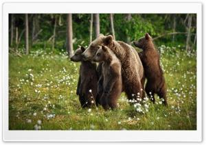 Wildlife Environment
