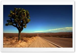 Joshua Tree Highway